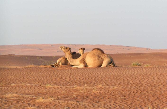 Erlebnisreise Oman