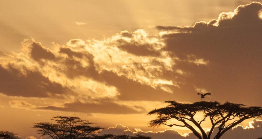 Erlebnisreise Tansania