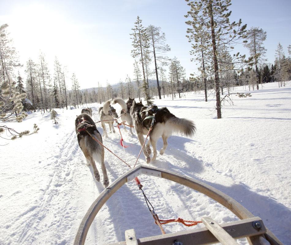 Erlebnisreise nach Finnland - Hundeschlitten-Safari