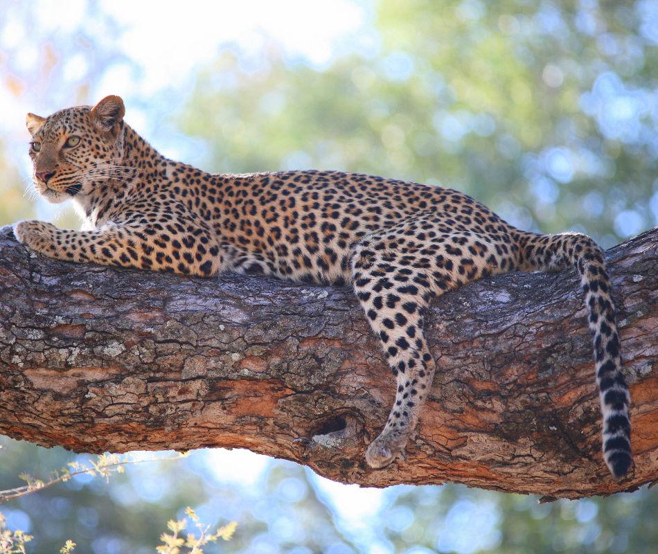 Individualreise Botswana, Individualreise Sambia, Rundreise Botswana und Sambia, Erlebnisreise durch das südliche Afrika