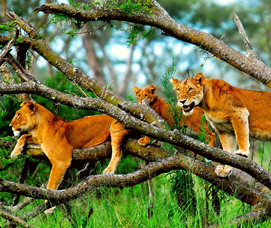 Individualreise Uganda, Erlebnisreise Uganda, Gorilla Trecking Uganda