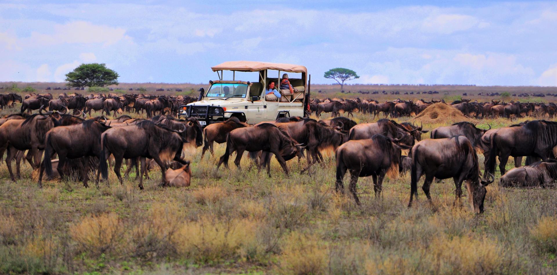 Individualreise Tansania, Erlebnisreise Tansania, Safaris in Tansania, Reiseroute Tansania, Lodges in Tansania
