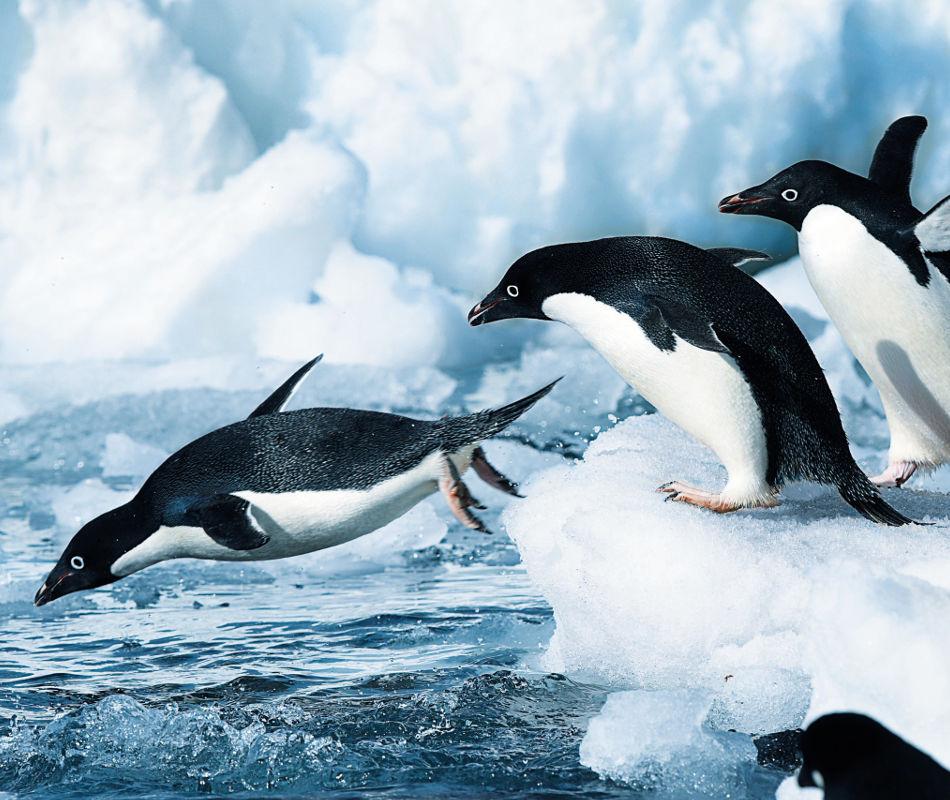 HANSEATIC nature, HANSEATIC inspiration, Expeditionsschiff Hapag Lloyd Cruises, Kreuzfahrt Arktis Antarktis