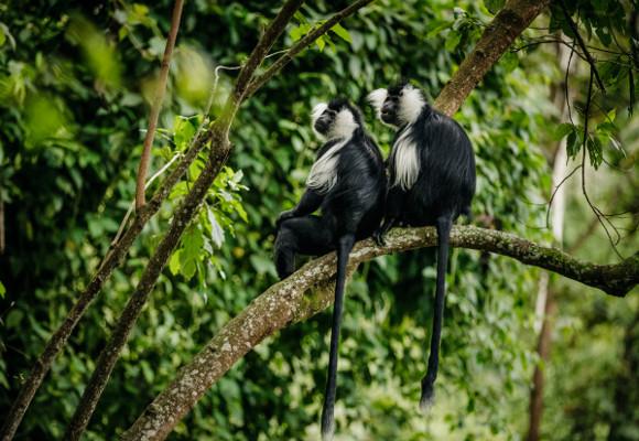 Ruanda Luxusreise, Erlebnisreise Ruanda, Erlebnisreise Afrika